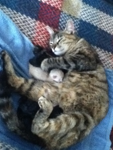 Our cat Nelly who gave birth to three kittens this morning. That grin tells you a lot about a natural birth!